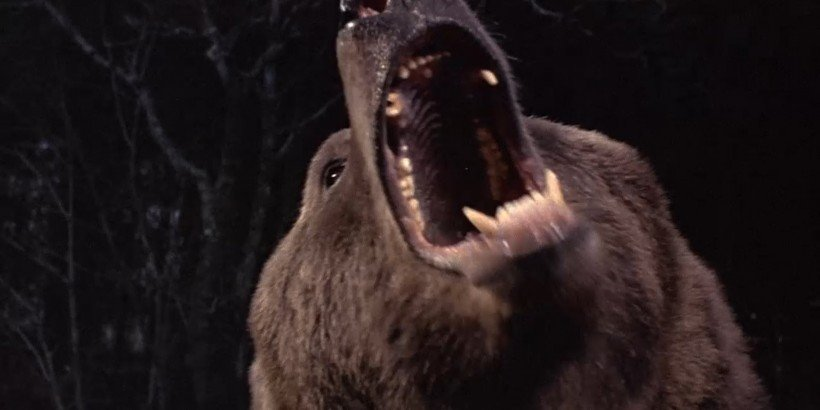 grizzly001