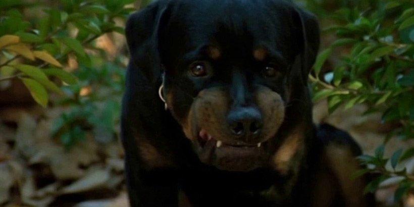 Madhouse - Rottweiler