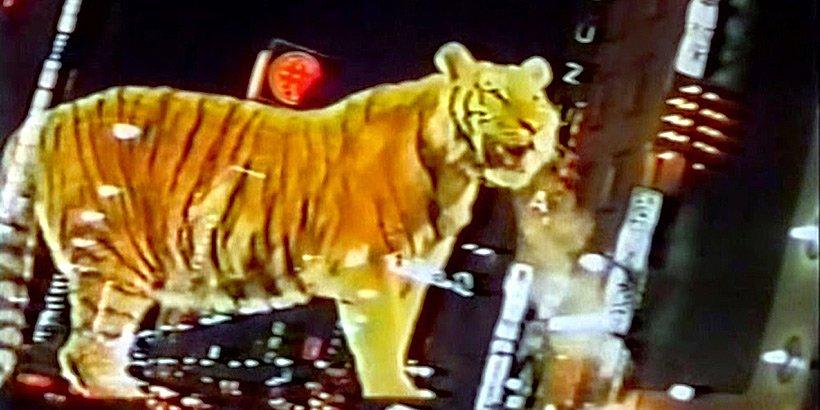 Wolf Guy - phantom tiger